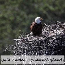 Eaglets-225