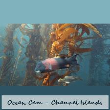 ocean125