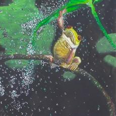 Froggy, Robbie Nuwanda, 24x20inch